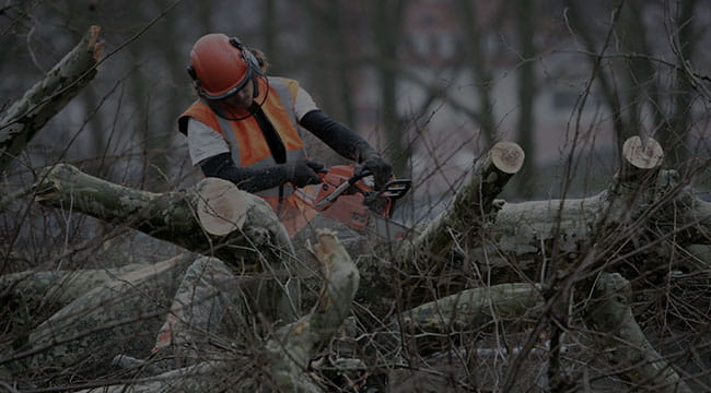 Plover Tree Service